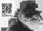 Тема сайта SZfan.ru в цепких лапах